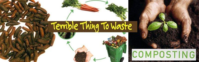 composting vegan worms
