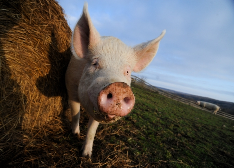 14 Stunning Portraits of Farm Animals Literally Begging Us Not to Eat Them