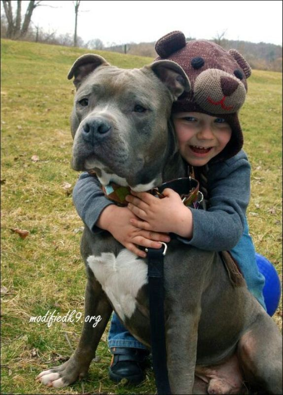 21 Adorable Photos that Show Pit Bulls Just Want to Give Love and Be Loved