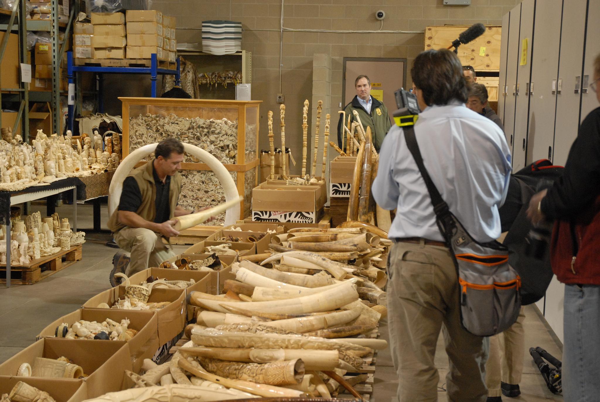 illegal wildlife trade hotspots