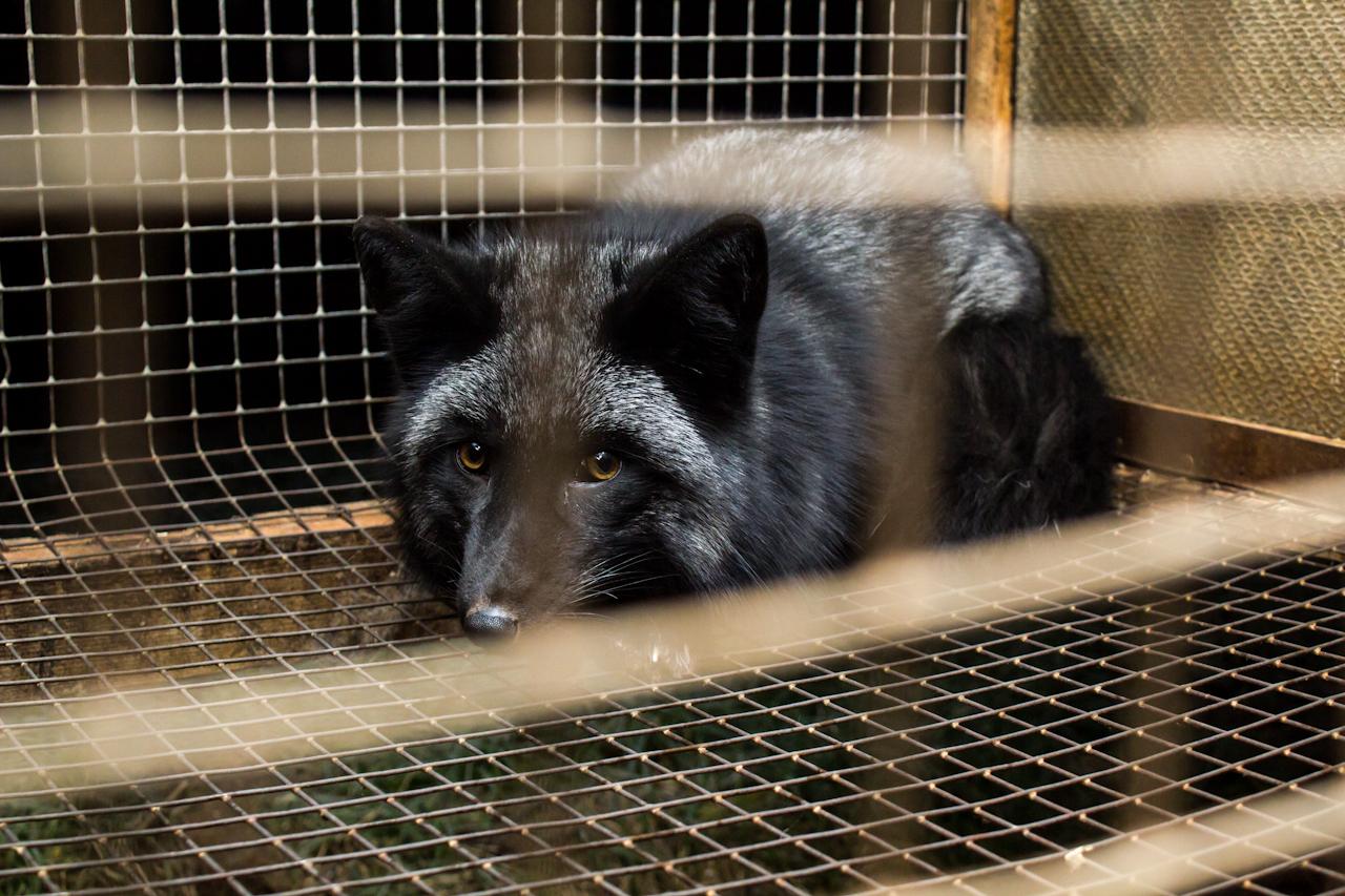 Fur farming