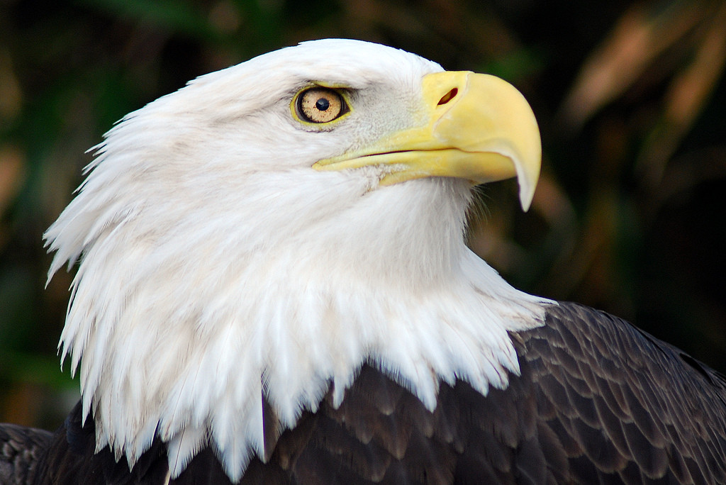 5 Facts You Didn't Know about America's Beloved Bald Eagle | One ...