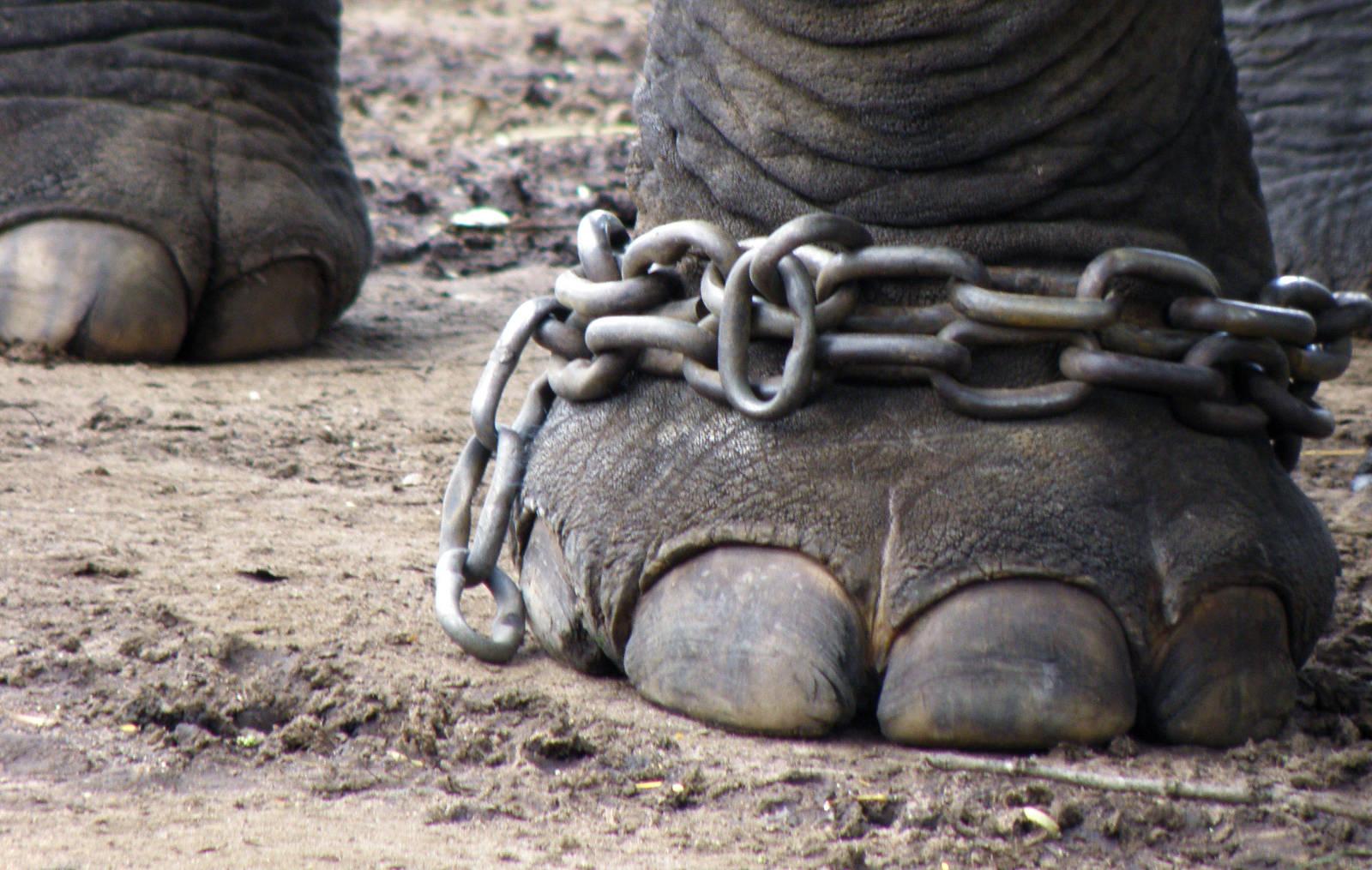 zoos animal prisons or animal sanctuaries essay