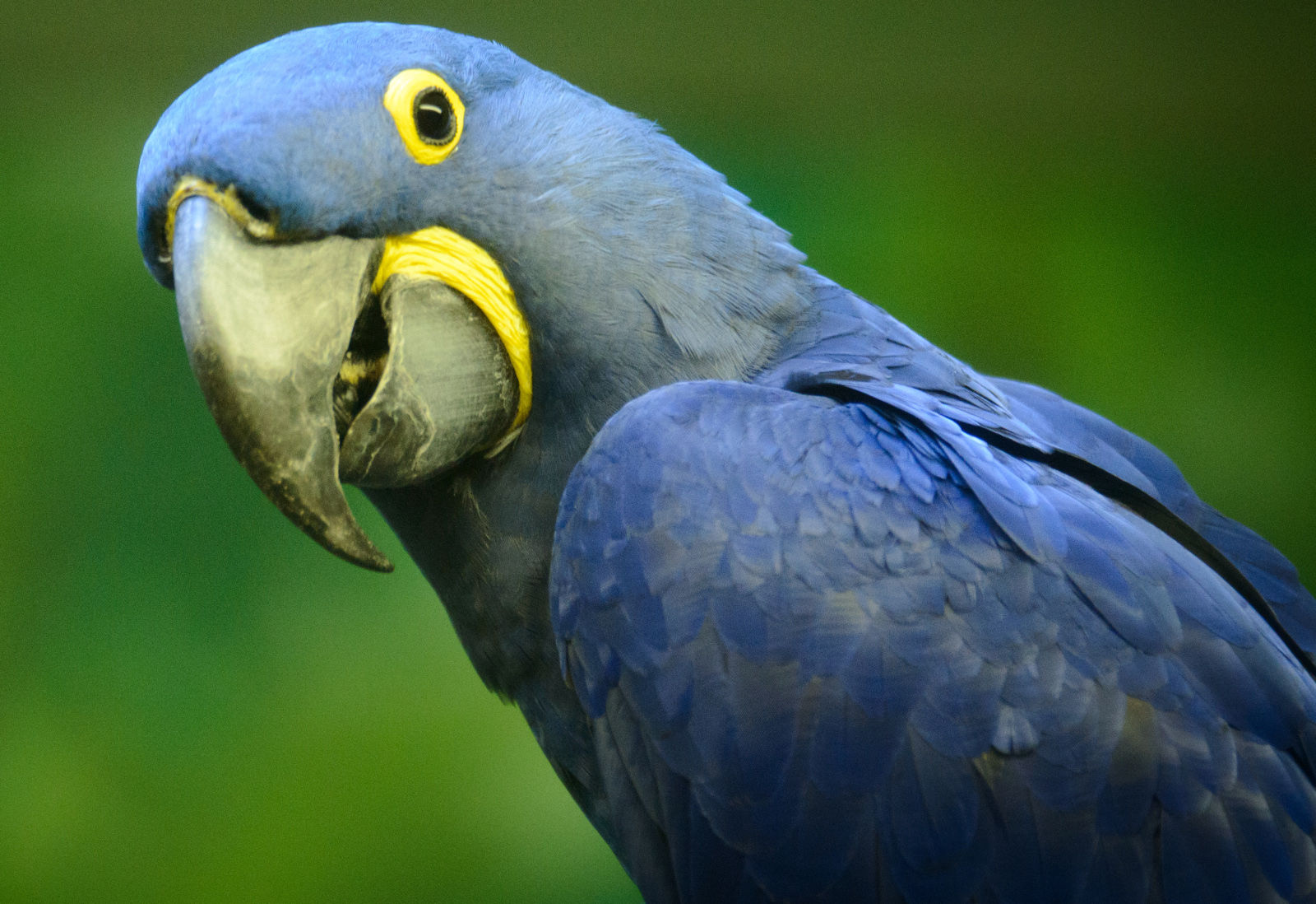 7 things you never knew about the exotic bird trade and how you