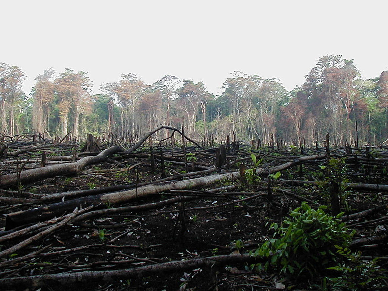 Beef Production is Killing the Amazon Rainforest | One Green Planet