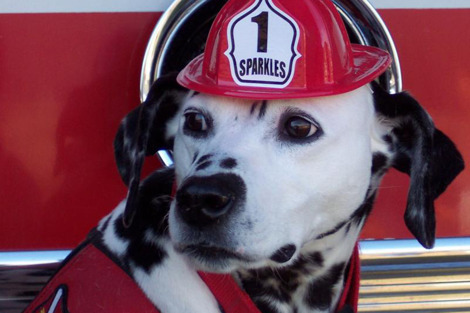 Tips For Keeping Pets Safe In Case Of Fire For National