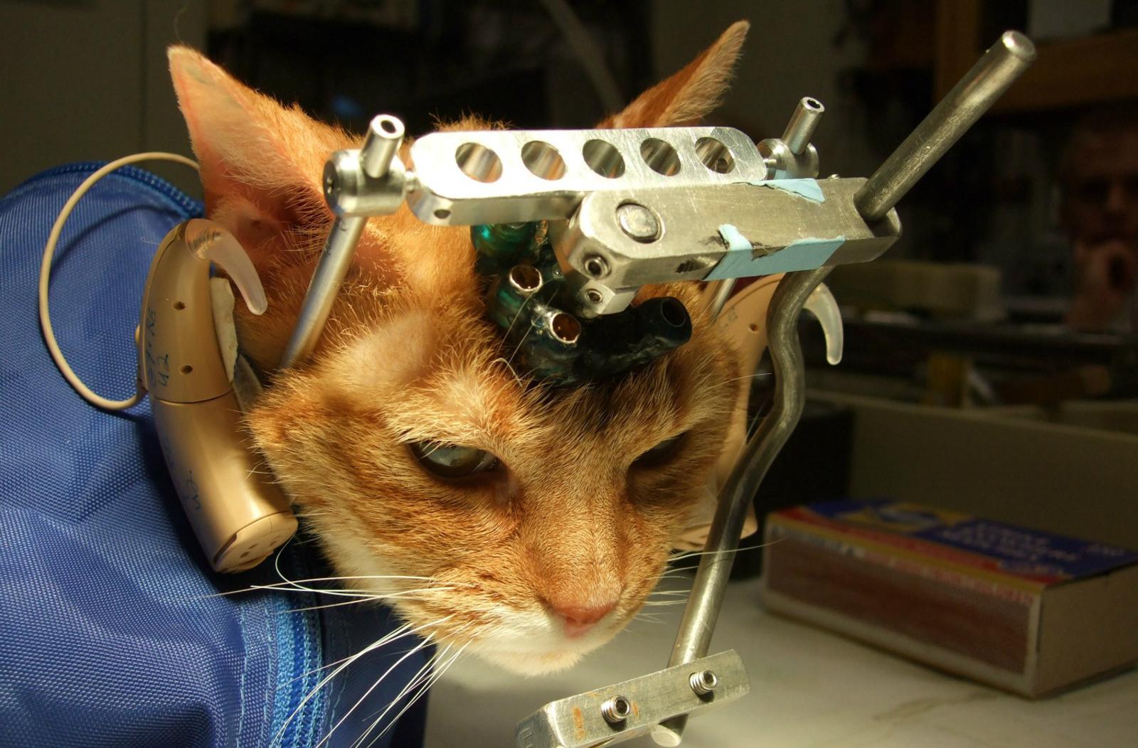 Výsledok vyhľadávania obrázkov pre dopyt animal testing