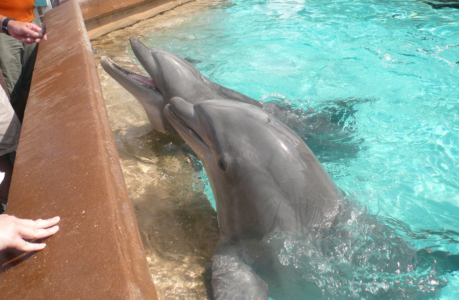 do dolphins have healing abilities or is dolphin therapy just