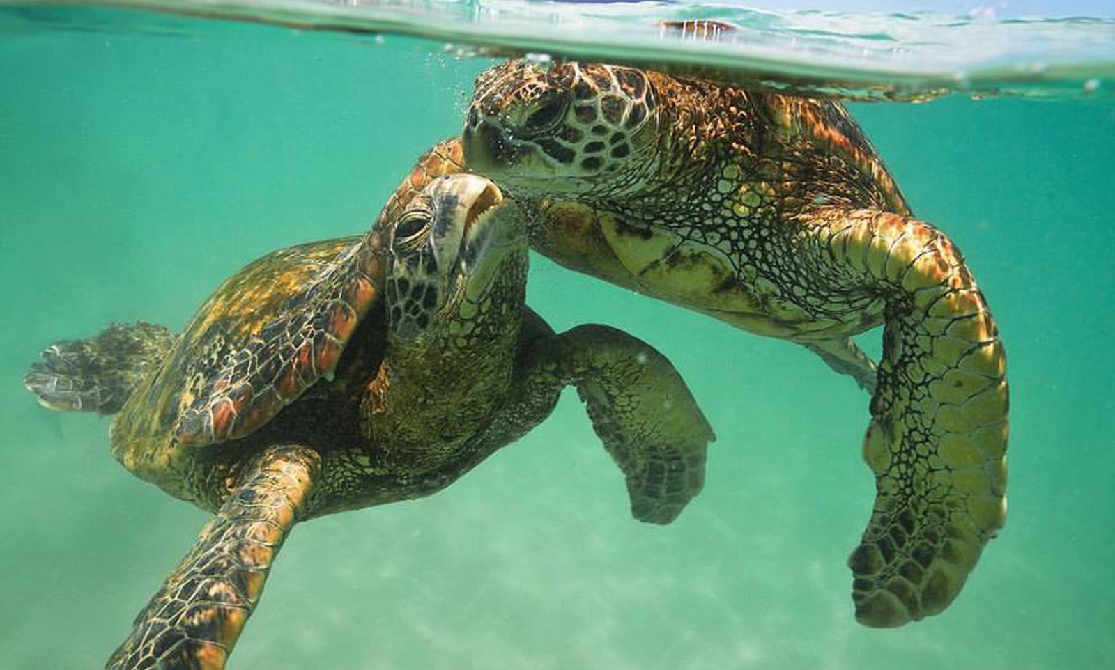 beautiful photo of affectionate turtles reminds us who really