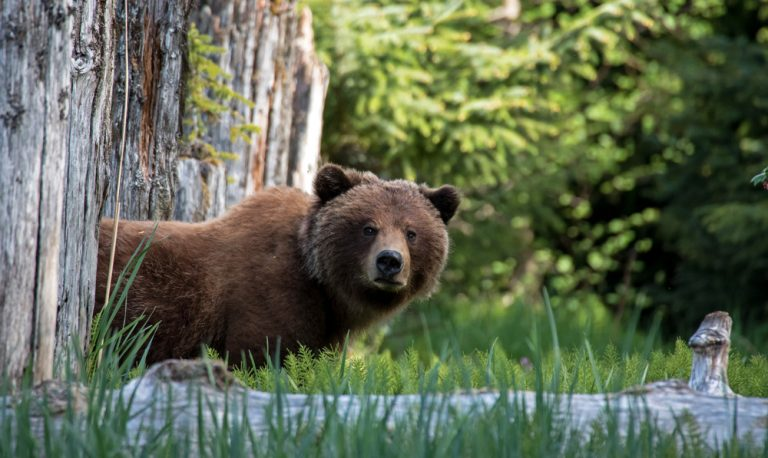 Federal Government Rolling Back Wildlife Protections to Allow Trophy Hunting on Alaska's National Preserves and Refuge