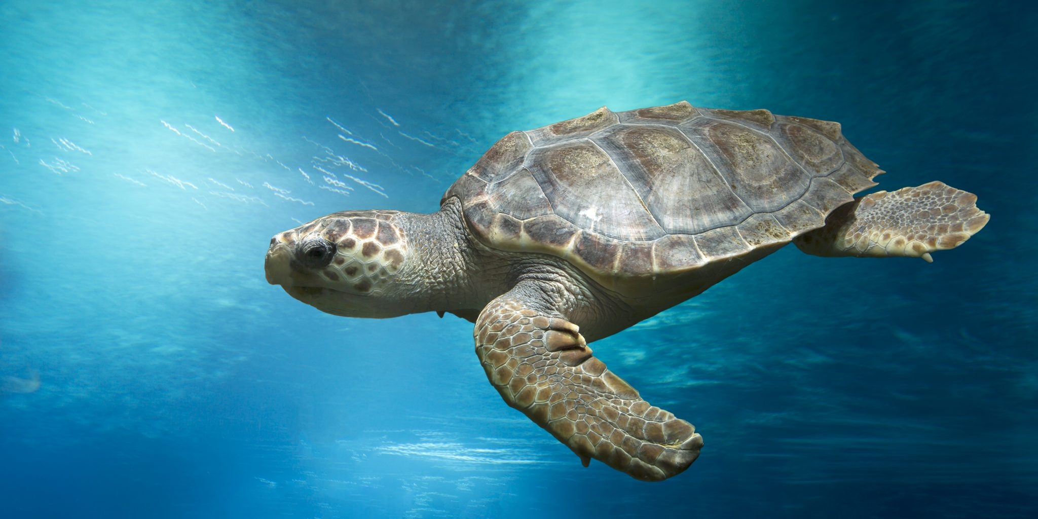 These Fishermen are Now Protecting the World's Most Endangered Sea Turtles Instead of Selling Them!