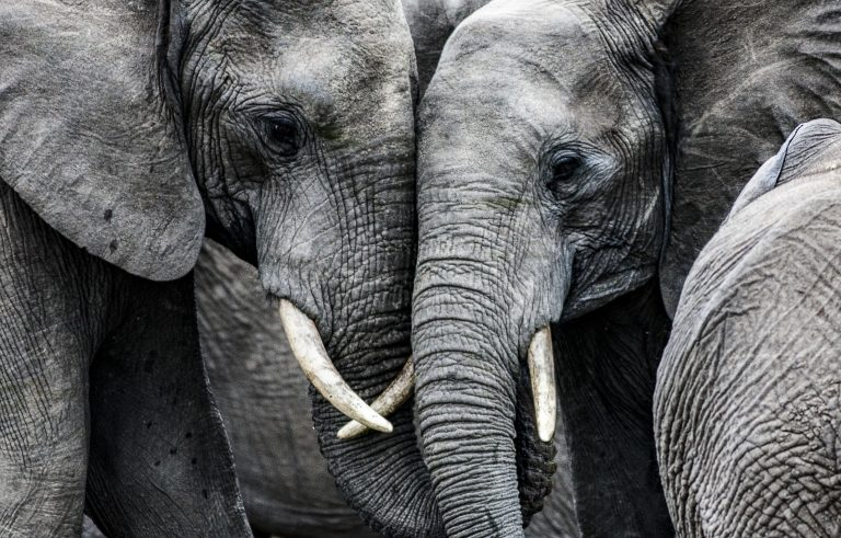 Petition: Restrict the Ivory and Rhino Horn Trade in Massachusetts
