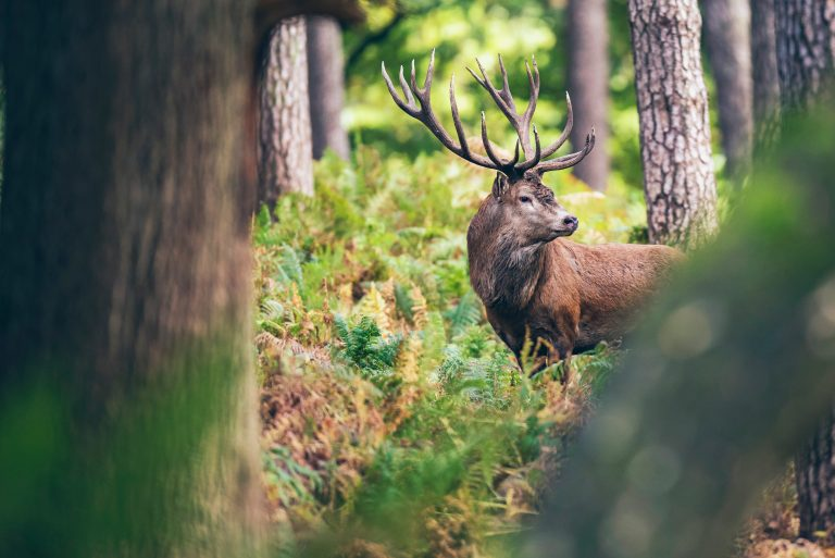 Petition: Coronavirus Grants and Loans Used for Stag Hunts Instead of Funding Struggling Businesses