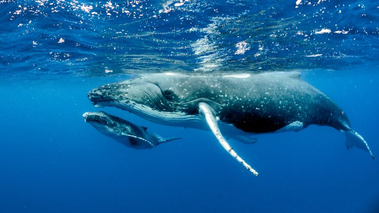 Petition: Whales, Dolphins, and Porpoises Face Unprecedented Risk of Extinction, Hundreds of Scientists Warn