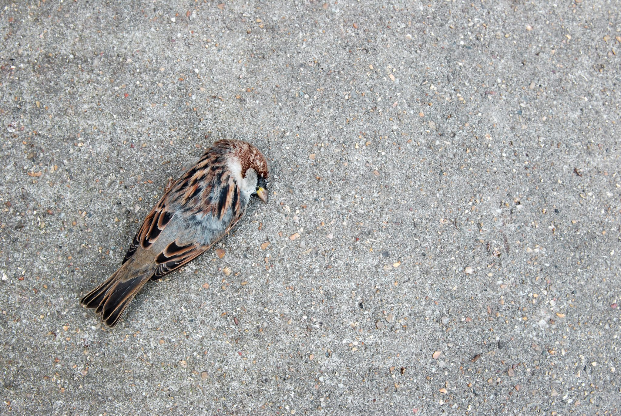 Petition: Over 1,500 Birds Flew into Philly Skyscrapers and Died in One Day