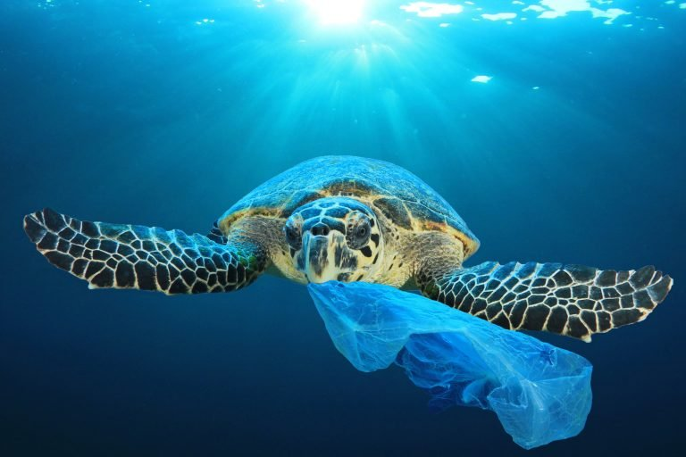 Petition: Marine Life Harmed Most By Plastic In Florida Than Any Other State