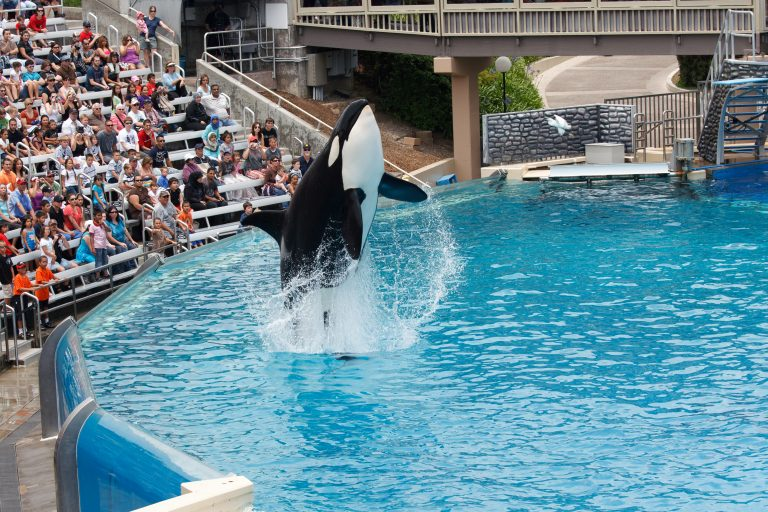 Petition: Big Mammals Suffer Brain Damage in Captivity According to Research