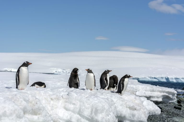 World's Largest Iceberg on Course to Hit Penguin Populations