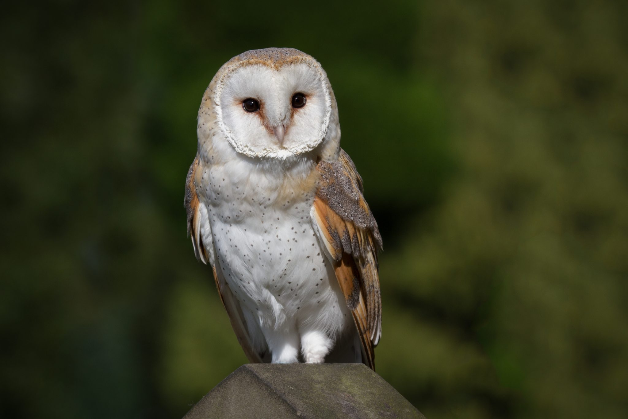 Petition: Firefighters Rescue Barn Owl From California Wildfire