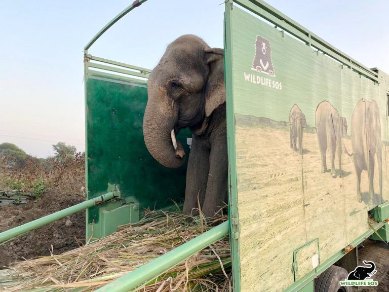 Petition: Elephant in India Who Was Made to Walk 1000 Miles in Spiked Chains is Finally Free!