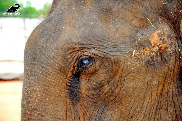Refuse to Ride: How to Identify an Elephant in Distress
