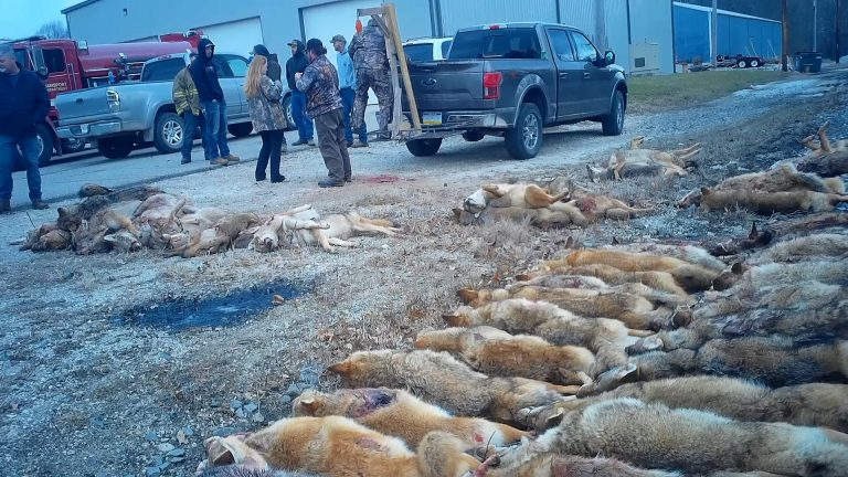 Petition: Participants Spend Two Days Killing as Many Animals as Possible at Wildlife Killing Contest in Indiana