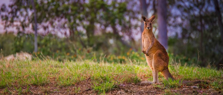 Petition: Kangaroo Protection Act Introduced in Congress: No More Killing Kangaroos for Athletic Shoes