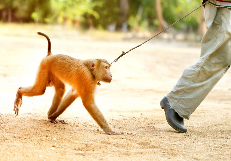 Petition: Ban Monkey Ownership in the UK