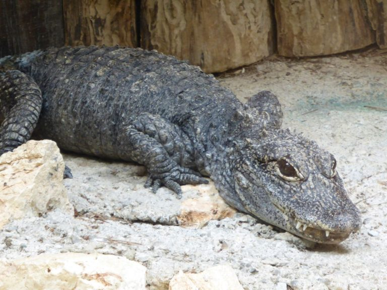 Exotic Pets Ownership Up By 60 Percent in the UK