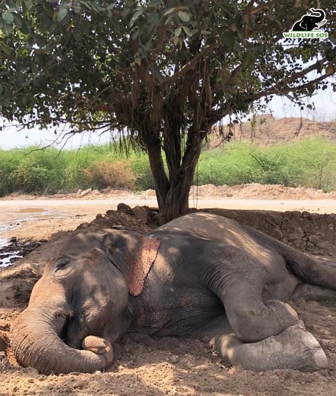 Negligent Truck Driver Kills Elephant