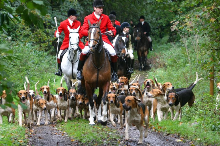 Cat Killed by Hunting Hounds and Thrown Over Fence by Hunter