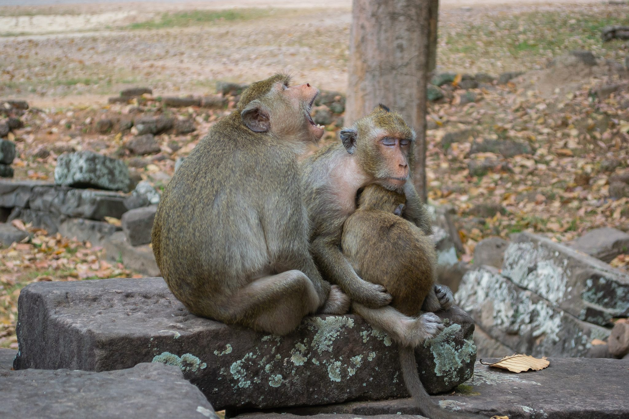 Activists Outraged After Canadian Companies Purchase Over 1000 Monkeys for Animal Testing