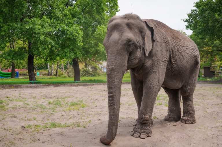 Cher Urges Edmonton Zoo to Free Elephant Living in Captivity for 40 Years