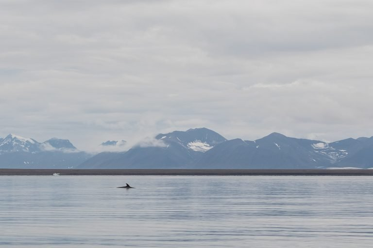 Norway Planning Auditory Experiment Using Whales