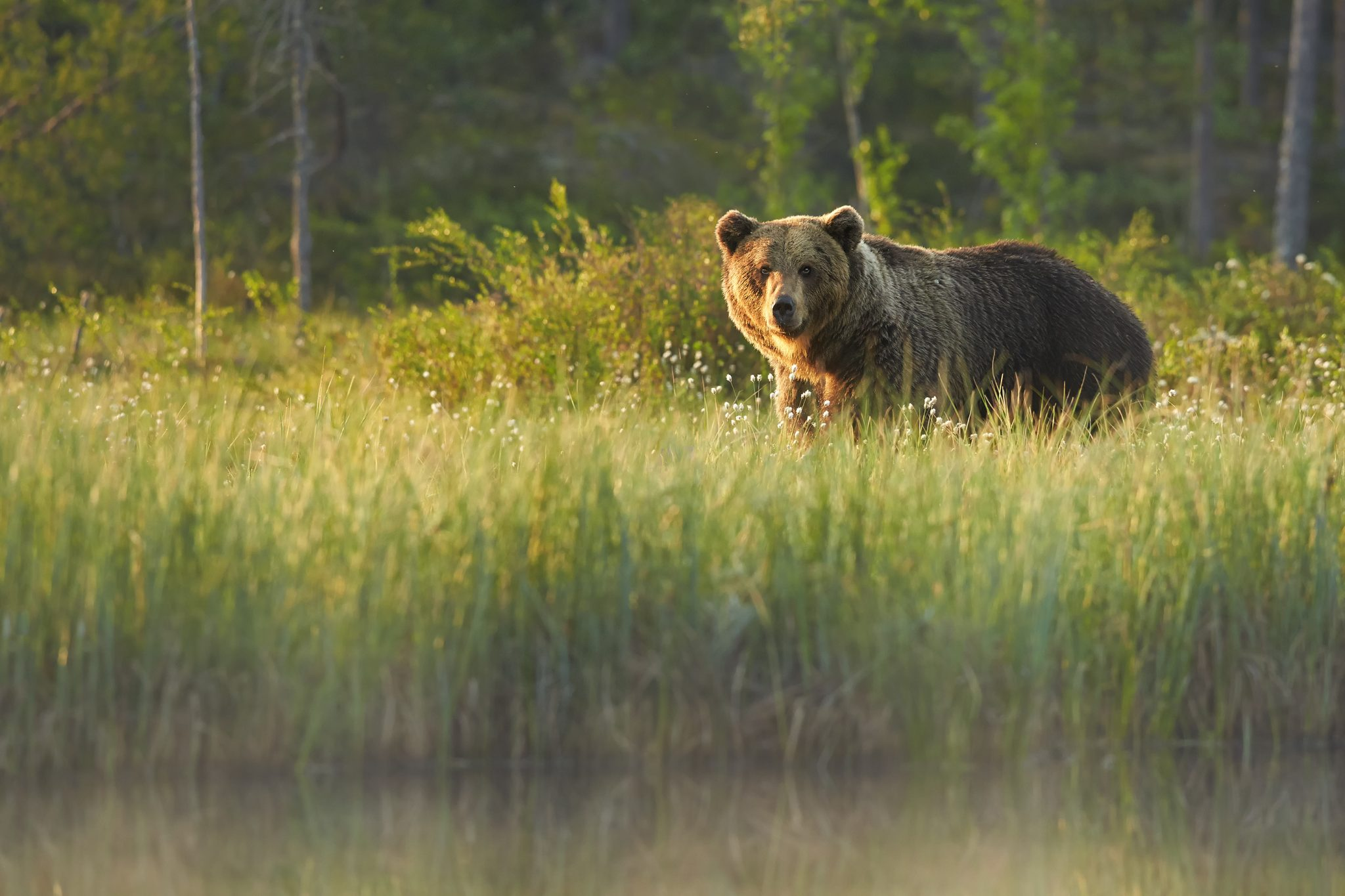 Who Decides How Your State's Wildlife is Treated?