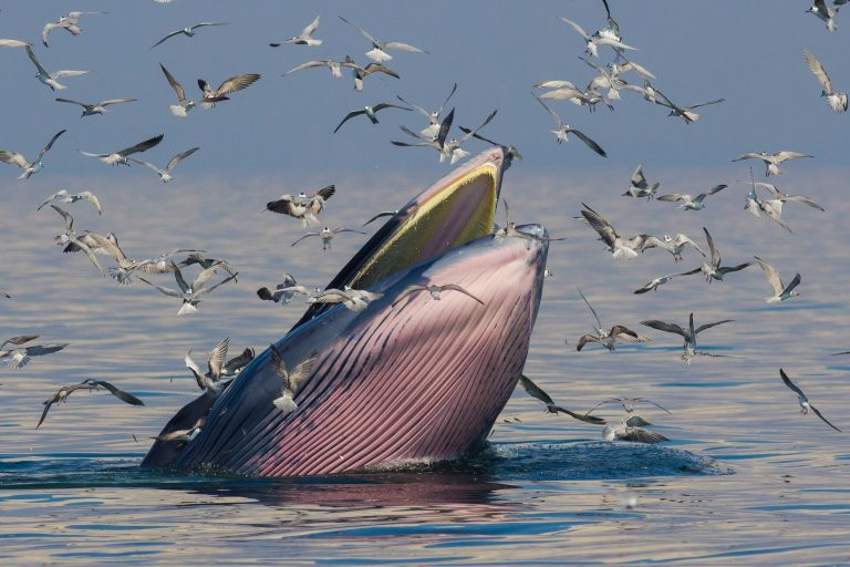 Whales in Danger in United States Waters