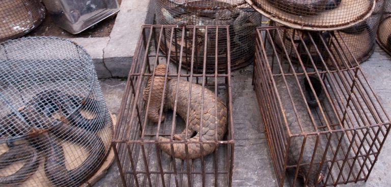 Why Wildlife Trafficking is Not Just Immoral But Extremely Unsafe