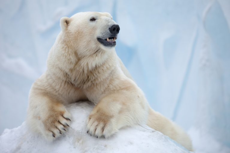 Canadian Woman Busted for Selling Polar Bear Skulls